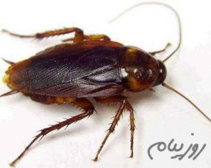 سمپاشی و ریشه کنی تضمینی حشرات و جانوران موذی