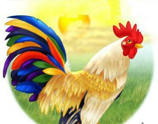 تولیدانواع شانه تخم مرغ  و کارتن