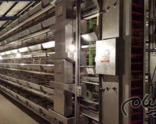 سازنده مدرن ترین قفس های پرورش مرغ گوشتی تخمگذار و پولت