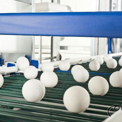 فروش قفس مرغ تخمگذارشرکت سپید طیوران