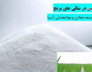 سیلیس شالی برنج