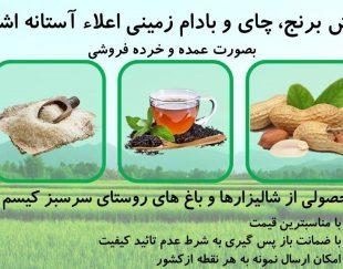 عرضه مستقیم انواع برنج، چای و بادام  گیلان